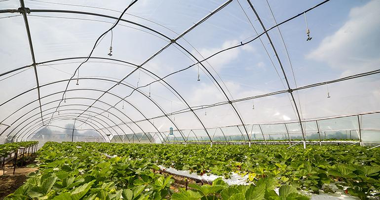 Los productores de plásticos agrícolas establecerán sistemas voluntarios para la gestión del residuo