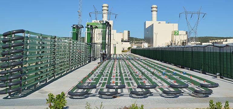 Yokogawa entra en el accionariado de AlgaEnergy, biotecnológica especializada en microalgas