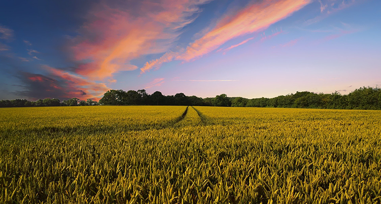 Fertiberia avanza en la sostenibilidad de sus fertilizantes