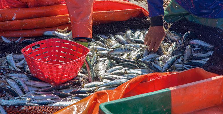 Aimplas, valorización, reciclaje, pesca, plástico