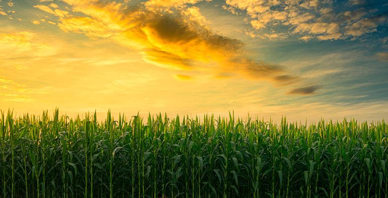 Estado de desarrollo, mercado y potencial de los biocombustibles avanzados en España