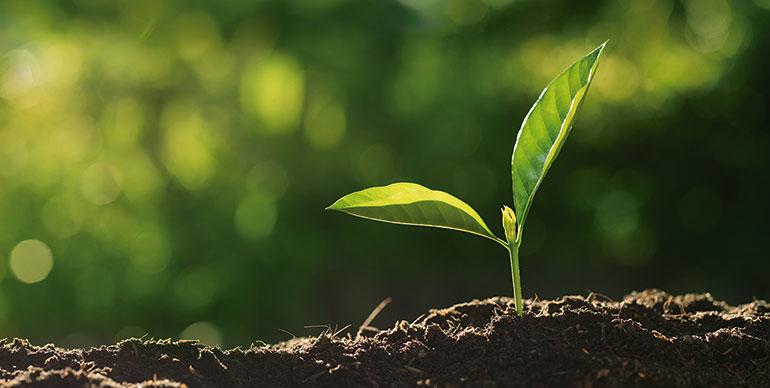 Estrategias de producción de biopesticidas a partir de residuos