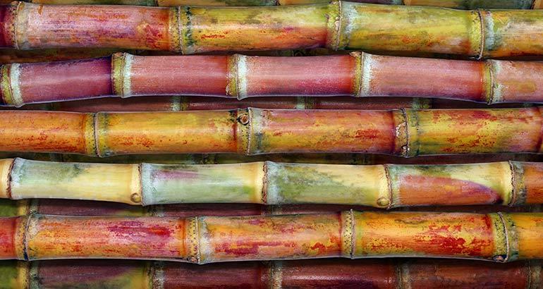 Obtención de vainillina a partir del bagazo de caña de azúcar