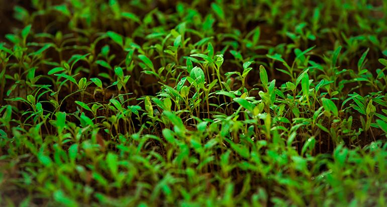 Fertilizantes y bioestimulantes mediante el aprovechamiento sostenible de residuos orgánicos