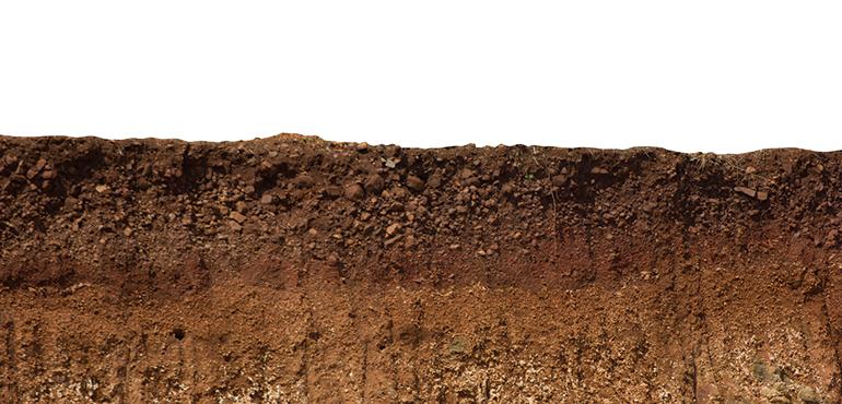 medioambiente, regeneración de suelos