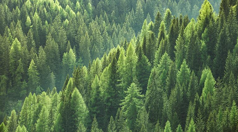bioenergía, medioambiente