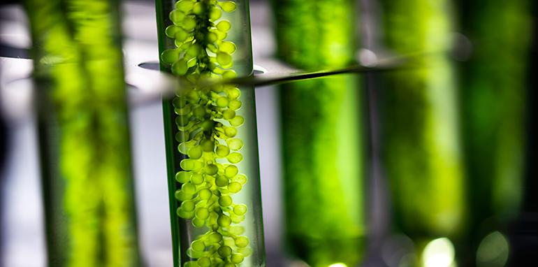 Ainia, biocombustibles