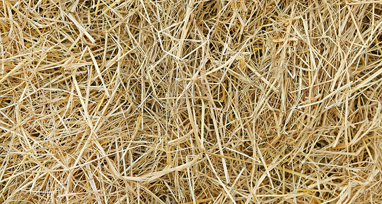 Bioplásticos y bioproductos de alto valor añadido a partir de biomasa lignocelulósica