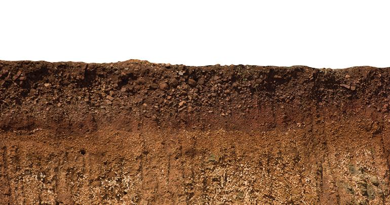 Manejos edáficos óptimos y captura de carbono